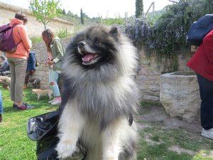 cane bosco www.qui.press