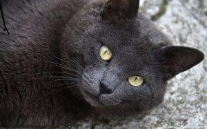 gatto nero www.qui.press