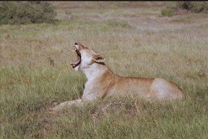 Kenya Tsavo park giuseppe mancini 1984