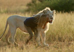 Mia e il leone bianco di Gilles De Maistre